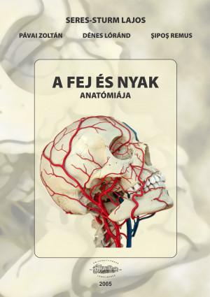 A fej és nyak anatómiája