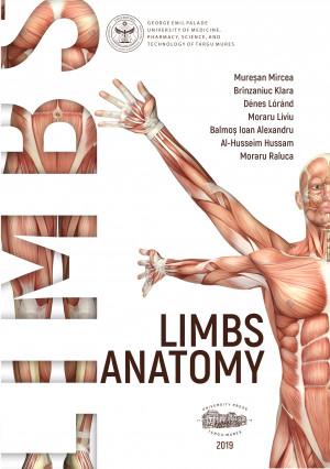 Limbs anatomy