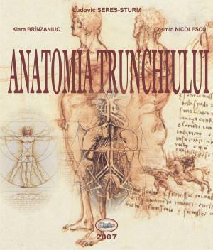 Anatomia trunchiului