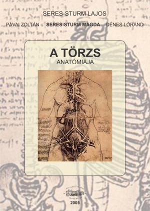 A törzs anatómiája